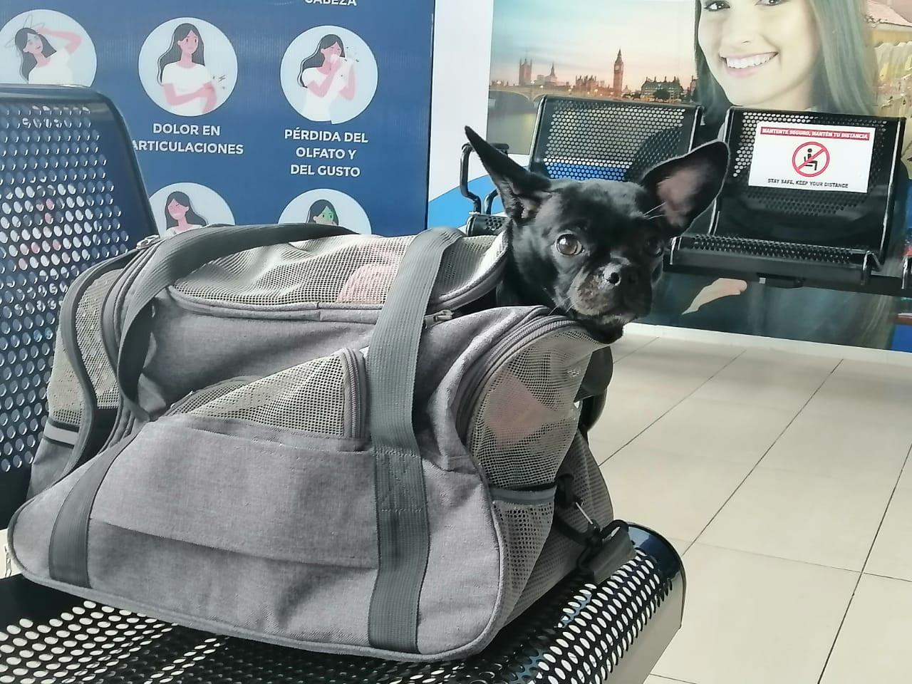 Conozca los requisitos para viajar con sus mascotas desde Toncontín